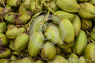 Raw Green Coconuts