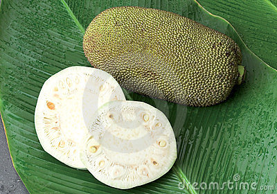 Raw jack fruit on green leafs