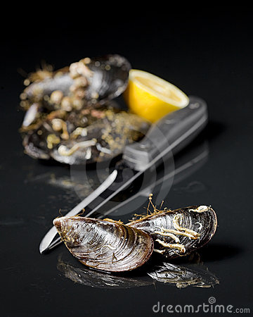Raw mussel food