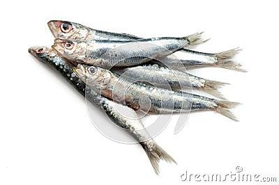 Raw sardines