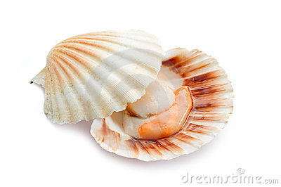 Raw scallop on white