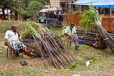 Raw sugarcane is offered for sale Editorial Stock Image