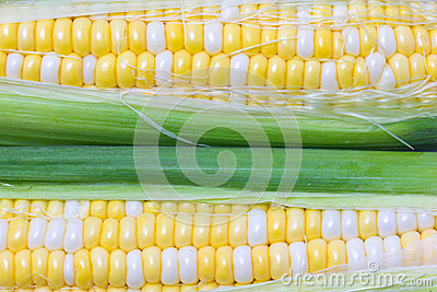 Raw Sweetcorn.