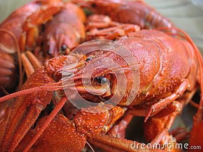сrawfish