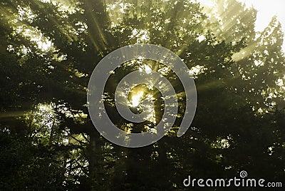 Rays of Sunlight