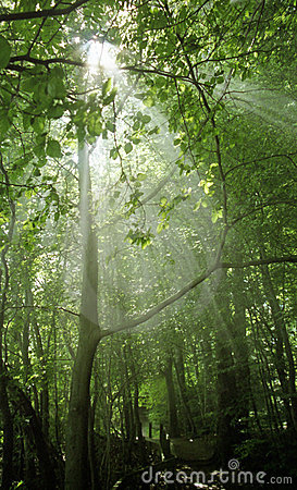 Rays of sunshine in a wood