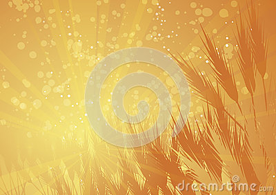 Rays wheat landscape