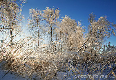 In rays of the winter sun
