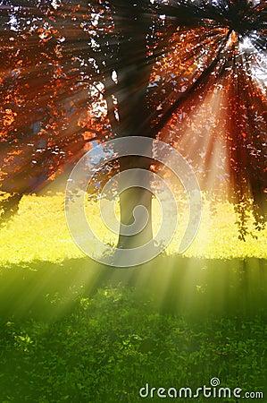 Árbol con los rayos del sol
