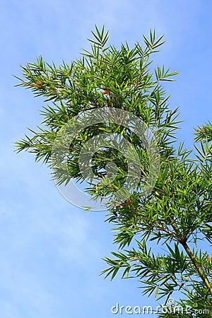Árbol de bambú verde