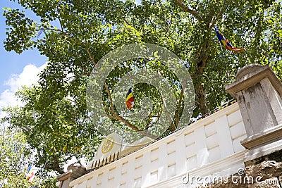Árbol de BO sagrado, Anuradhapura, Sri Lanka
