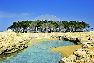 Árbol de pino en costa
