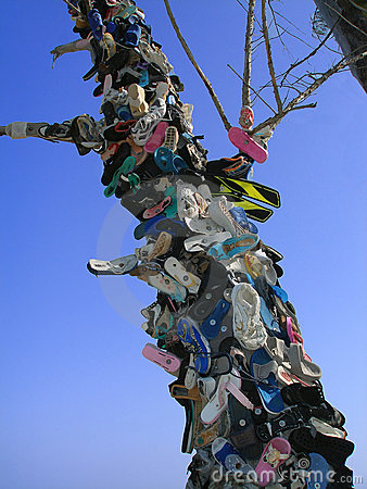 Árbol del zapato