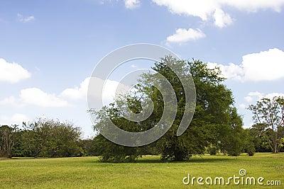 Árbol en un parque