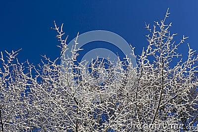 Árbol nevado y cielos azules