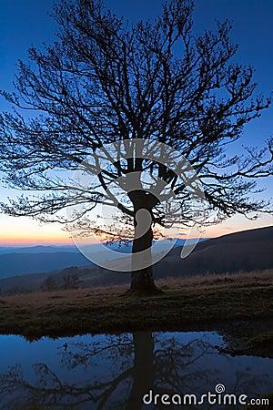 Árbol solo del otoño en tapa de la colina de la montaña de la noche