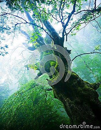 Árbol viejo
