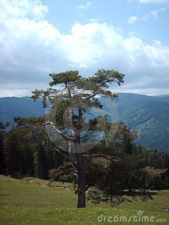 Árbol y bosque
