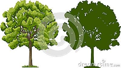 Árbol y silueta