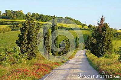 Árboles de ciprés de Toscana con la pista