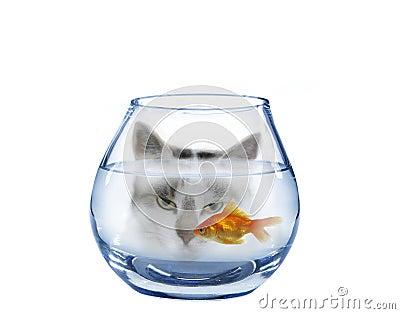 Readiness on fish