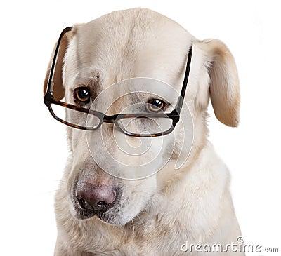 Reading Glasses Funny Dog