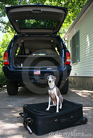 Ready to Go - Dog on a Suitcase