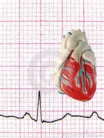 Real EKG with Model Heart