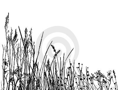 Real grass  silhouette / vector