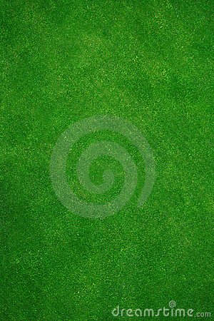 Free Real Green Grass Stock Photo - 850660