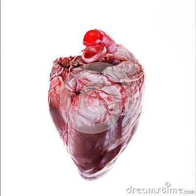 Free Real Heart Royalty Free Stock Photo - 3218825