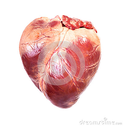 Free Real Heart Stock Photography - 40710152