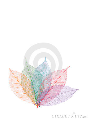Free Real Leaf With Detail Vein And Various Colors Royalty Free Stock Photos - 11291588