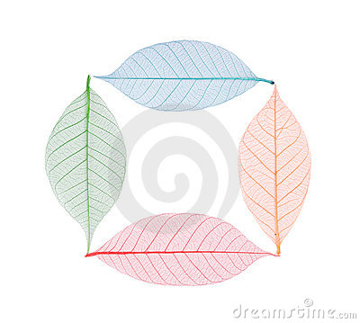 Free Real Leaf With Detail Vein And Various Colors Stock Image - 11291591
