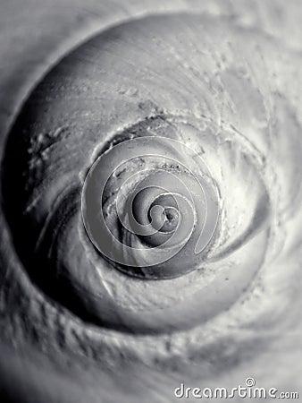 Real Snail Seashell Pattern BW