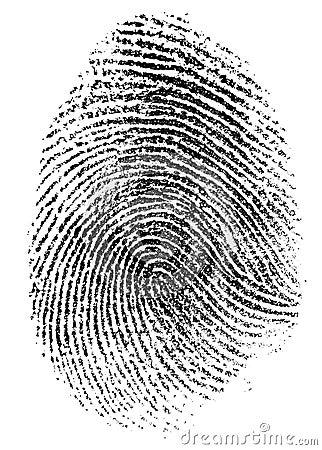 Real Thumb Fingerprint Pattern Isolated Royalty Free Stock