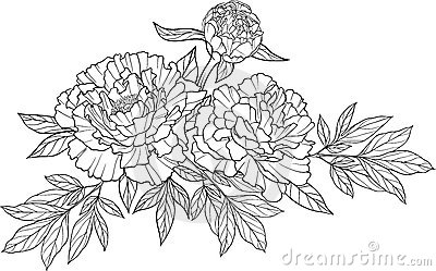 Realistic graphic three peony flower tattoo