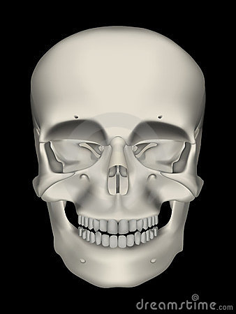 Realistic Human Male Skull
