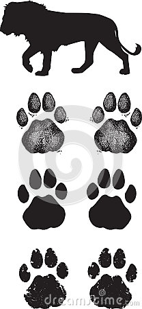 Realistic lion tracks or footprints