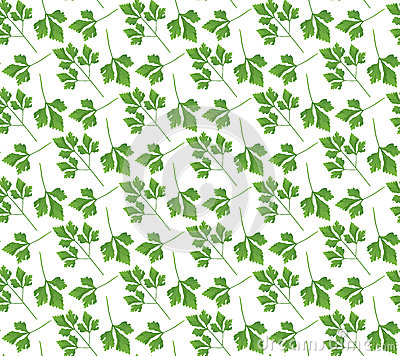 Free Realistic Natural Seamless Pattern With Green Herb. Parsley Branch And  Leaves On White Background. Flora Style. Vector Illustrati Stock Photos - 91200283