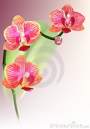 Realistic purple orchid flower