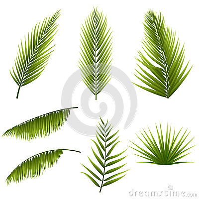 Free Realistic Tropical Green Palm Leaves Set Isolated On White Background. Exotic Jungle Flora. Elements For Your Design Stock Images - 94261574