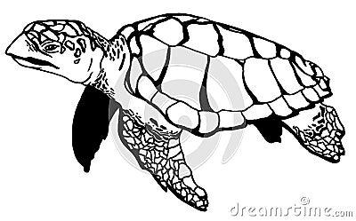Realistic Turtle Illustraction