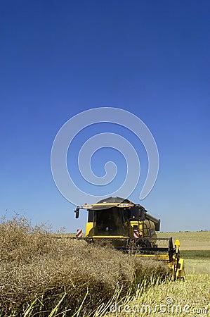 Reaping-machine threshing-machine with work
