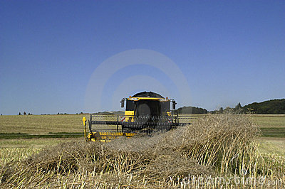 Reaping-machine threshing-machine with work