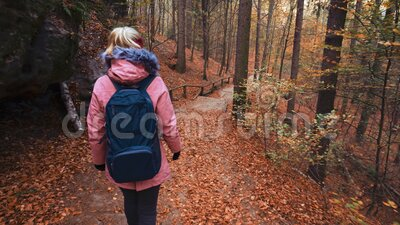 Rear view of woman tourist with backpack exploring national park forest in autumn season.  stock footage