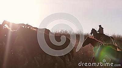 Rebanho dos cavalos