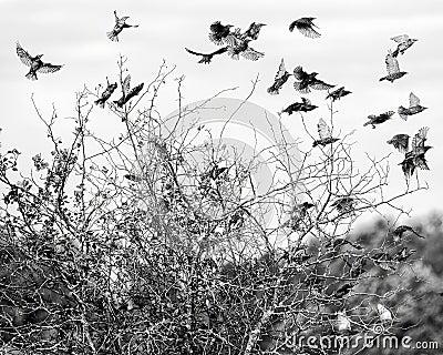 Rebanho dos pássaros no vôo