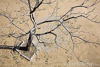Rebirth of a tree
