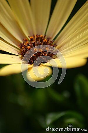 Recht gelbe Blume